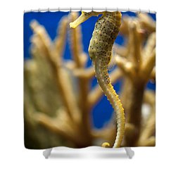 Sea Horses Shower Curtain by Carol Ailles