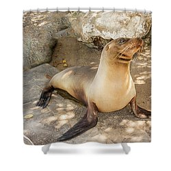 Sea Lion On The Beach, Galapagos Islands Shower Curtain by Marek Poplawski