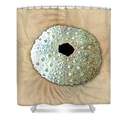 Shower Curtain featuring the photograph Sea Urchin by Anastasiya Malakhova