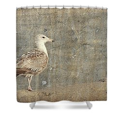 Seagull - Jersey Shore Shower Curtain