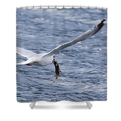 Seagull Shower Curtain