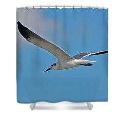 Shower Curtain featuring the photograph 1- Seagull by Joseph Keane