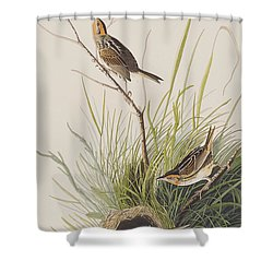 Sharp Tailed Finch Shower Curtain by John James Audubon