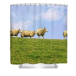 Shower Curtain featuring the photograph Sheep On Dyke by Patricia Hofmeester