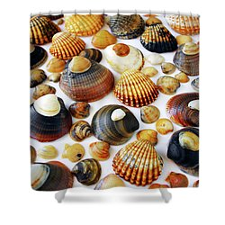 Shell Background Shower Curtain by Carlos Caetano