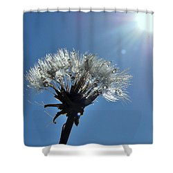 Shower Curtain featuring the photograph Shining by Marija Djedovic