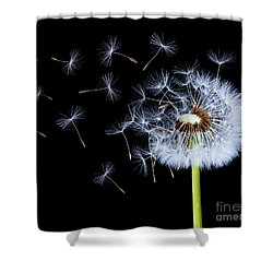 Shower Curtain featuring the photograph Silhouettes Of Dandelions by Bess Hamiti