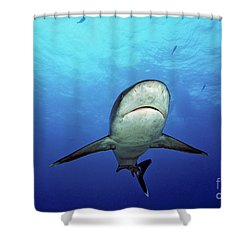 Silvertip Shark Shower Curtain by Dave Fleetham - Printscapes