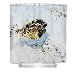 Smooth Trunkfish Shower Curtain