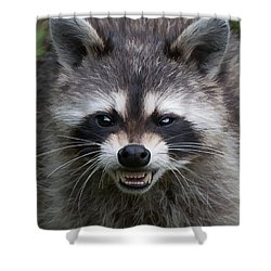 Snarling Raccoon Shower Curtain