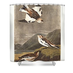Snow Bunting Shower Curtain