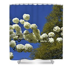 Shower Curtain featuring the photograph Snowballs by Skip Willits