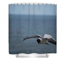 Shower Curtain featuring the photograph Soaring by Debbie Karnes
