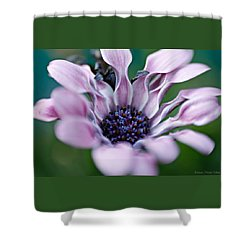 Soft Purple Shower Curtain