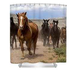 Sombrero Ranch Horse Drive, An Annual Event In Maybell, Colorado Shower Curtain