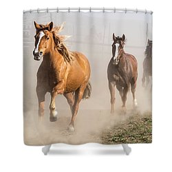 Sombrero Ranch Horse Drive At The Corrals Shower Curtain