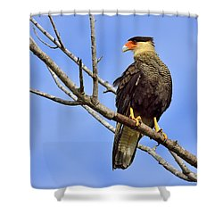 Shower Curtain featuring the photograph Southern Comfort by Tony Beck