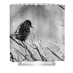 Snarky Sparrow, Black And White Shower Curtain