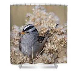 Sparrow Shower Curtain