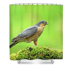 Sparrowhawk Shower Curtain