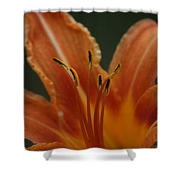 Shower Curtain featuring the photograph Spider Lily by Cathy Harper