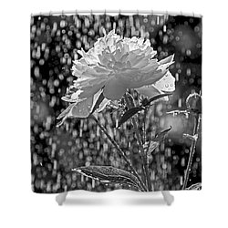 Spring Rain - 365-13 Shower Curtain by Inge Riis McDonald