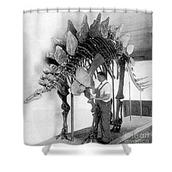 Stegosaurus Shower Curtain by Science Source