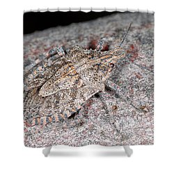 Shower Curtain featuring the photograph Stink Bug by Breck Bartholomew