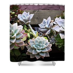 Succulents Shower Curtain by Catherine Lau