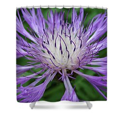 Shower Curtain featuring the photograph Summer Blooms by Rebecca Overton
