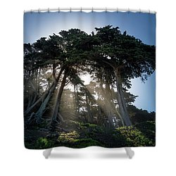 Sunbeams From Large Pine Or Fir Trees On Coast Of San Francisco  Shower Curtain by Steven Heap