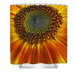 Sunflower Center Shower Curtain by Elvira Butler