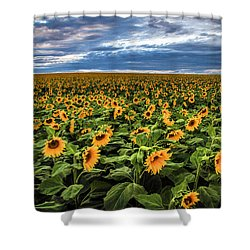 Sunflower Farm Shower Curtain by Juli Ellen