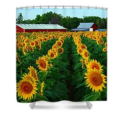 Sunflower Field #4 Shower Curtain