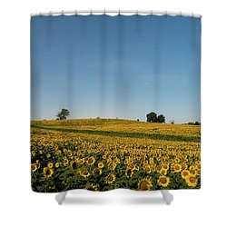 Sunflower Nights Shower Curtain