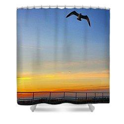 Sunrise Seagull Shower Curtain