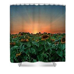 Sunset Over A Sunflowers Field Shower Curtain