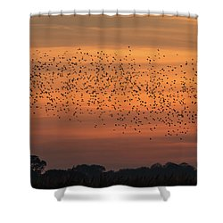 Sunset Starlings  Shower Curtain