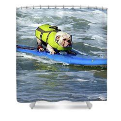 Surfing Dog Shower Curtain by Thanh Thuy Nguyen