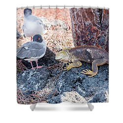 Swallow Tailed Gull And Iguana On  Galapagos Islands Shower Curtain