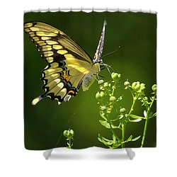 Shower Curtain featuring the photograph Elegant Swallowtail Butterfly by Christina Rollo
