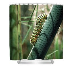 Swallowtail Caterpillar Shower Curtain by Meir Ezrachi