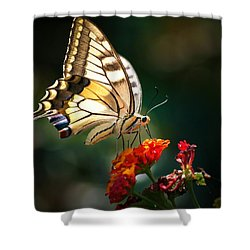 Swallowtail Shower Curtain by Meir Ezrachi