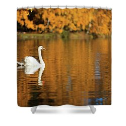 Swan On A Lake Shower Curtain