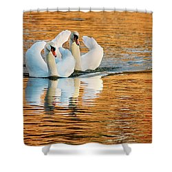 Shower Curtain featuring the photograph Swimming On Gold by Darren Fisher