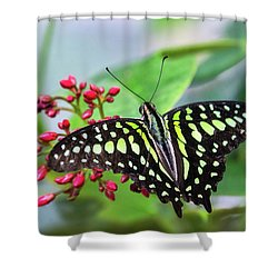 Shower Curtain featuring the photograph Tailed Green Jay Butterfly  by Saija Lehtonen