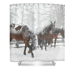 Tails To The Wind Shower Curtain by Gary Hall