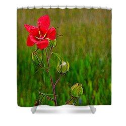 Texas Star Hibiscus Shower Curtain