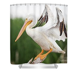 Shower Curtain featuring the photograph The Amazing American White Pelican  by Ricky L Jones