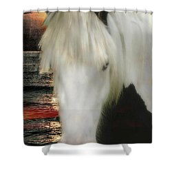 The Beautiful Face Of A Gypsy Vanner Horse Shower Curtain